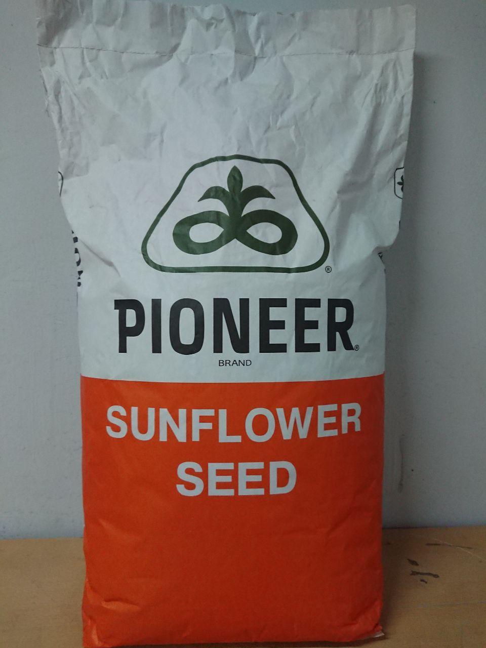 Піонер P62LE122 насіння соняшнику під гранстар (Pioneer) DuPon