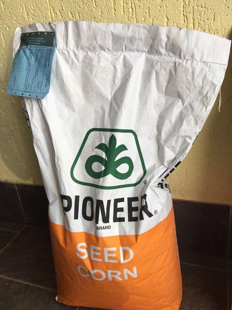 PR37Y12 Pioneer насіння кукурудзи