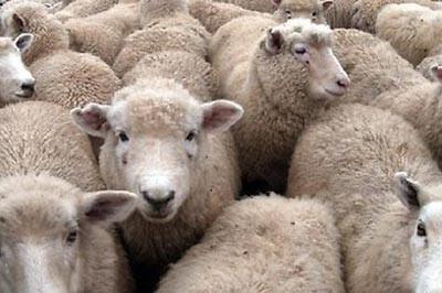Одеяла из овечьей шерсти
