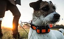 Система слежения за собаками Garmin Alpha 100 Т5 mini (010-01486-A3), фото 3