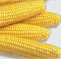Кукуруза Добриня F1 25 000 сем