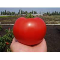 Семена томата красного Акела 5 000 сем. Clause / Клоз