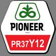 Гибрид кукурузы ПР37И12