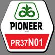 Гибрид кукурузы ПР37Н01
