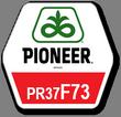 Гибрид кукурузы ПР37Ф73