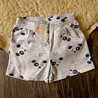 Детские шорты щенки на сером Five Stars HD0333-134p