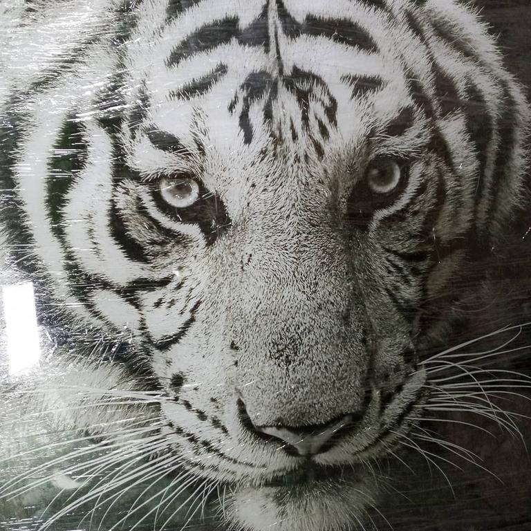 Интерьерное стеклянное панно с фотопечатью черно-белого изображения тигра