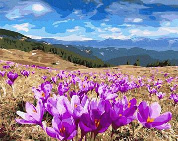 Картины по номерам 40х50 см Brushme Долина крокусов (GX 27318)