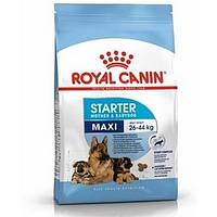 Royal Canin (Роял Канин) Maxi Starter - первый твердый корм для щенков крупных пород