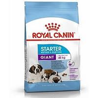 Royal Canin (Роял Канин) Giant Starter - первый твердый корм для щенков гигантских пород