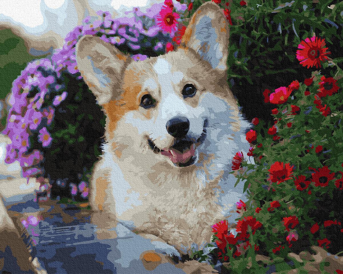 Картина по номерам - Корги в цветах Brushme 40*50см. (GX36083)