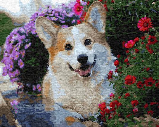 Картина по номерам - Корги в цветах Brushme 40*50см. (GX36083), фото 2