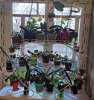 Фиалка-3, подставка для цветов на 39 чаш, фото 1
