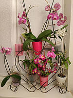 Сердце-2, подставка для цветов на 7 колец для орхидей