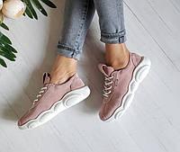 Пудровые замшевые кроссовки TED CASUAL