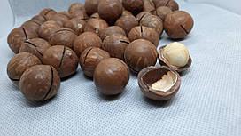 Орех Макадамия в скорлупе