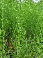 Хвощ трава 100 грамм.