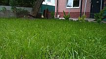 Насіння газонних трав Універсальний газон, 1 кг