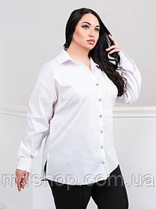 Жіноча біла класична блуза великих розмірів (Венесуела lzn)