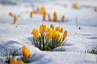 Весна уже тут и тепло не за горами!