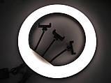 Кільцева LED лампа YQ-460B з пультом + Штатив тринога (45см 220V 3 крепл.тел.), фото 9
