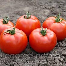 Флорида F1 10 шт насіння низькорослого томату Seminis Голландія