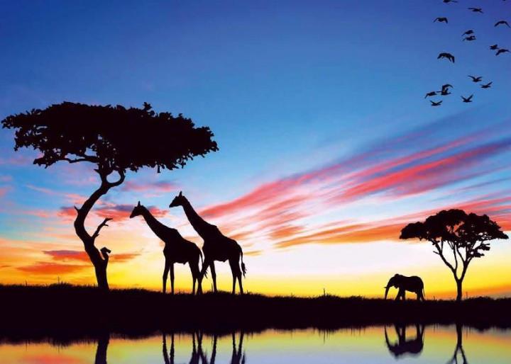 Фотошпалери Престиж Африка №60