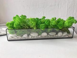 Скляний прямоугольний Флораріум кашпо зі стабілізованим скандинавським мохом 26 см /Декор для дому і офісу