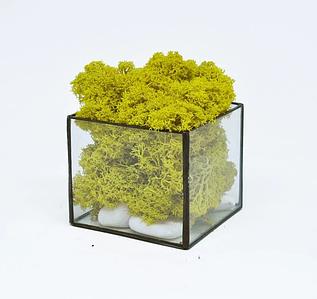 Стеклянный Флорариум кашпо куб со стабилизированным мхом желтый 7 см /декор для дома и офиса /Композиции с мха