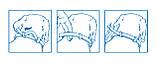 Ошейник от блох и клещей Форесто Foresto Bayer для кошек и собак малых пород 38 см, фото 5