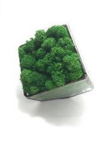 Стеклянный Флорариум кашпо со стабилизированным мхом темно-зеленый 7 см /декор для дома и офиса
