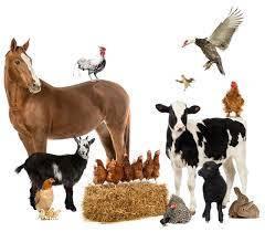 Пробиотики для животных