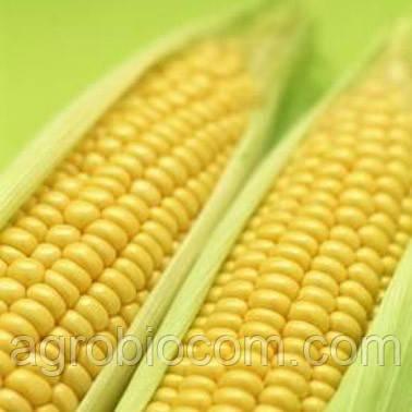 Семена кукурузы НС-400