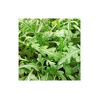 ВАЙЛД РОКЕТ - семена рукколы 50 грамм, SEMO, фото 1