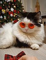 Очки для собак и кошек Multibrand в золотой оправе, красные (не стекло, пластик)
