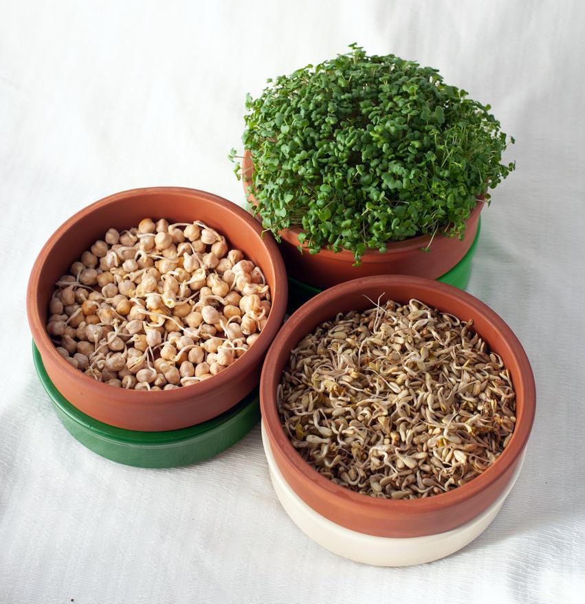 Проращиватель зерен и микрозелени 3 лотка Ø 17см Спраутер Керамика