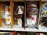 Бульби Жоржини сорт японської селекції Коган Фубукі багаторічна лососевий колір з жовтим центром 1 шт Junior, фото 2
