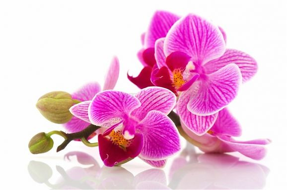 Косметический парафин для парафинотерапии. Аромат: Орхидея. Вес: 400 гр.