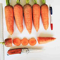 ТАНЖЕРИНА F1 (T-825 ) - семена моркови,  Takii Seeds, фото 1