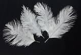 Пір'я страуса Декоративне пір'я Біле 25-30см, фото 2