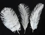 Пір'я страуса Декоративне пір'я Біле 25-30см, фото 5