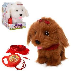 Собака MP 0209 22см,сенсорн,реаг.на хлопок, звук,ходит,мягкая,,2в,на бат, в кор-ке,15-22-19см