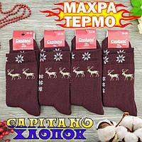 Шкарпетки жіночі махрові високі Capitano 23-25р олень бордовий