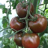 БИГ САШЕР F1 100с. - семена томата, Yuksel Seeds, фото 1
