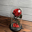 Стабилизированная роза в колбе с led подсветкой вечная долгосвежая цветы ночник подарок на 8 марта, фото 4