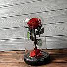 Стабилизированная роза в колбе с led подсветкой вечная долгосвежая цветы ночник подарок на 8 марта, фото 5
