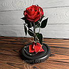 Стабилизированная роза в колбе с led подсветкой вечная долгосвежая цветы ночник подарок на 8 марта, фото 6