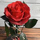 Стабилизированная роза в колбе с led подсветкой вечная долгосвежая цветы ночник подарок на 8 марта, фото 7
