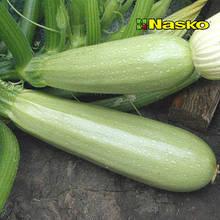 Семена кабачка Динар F1, 1 шт, Nasko (Наско), Молдавия