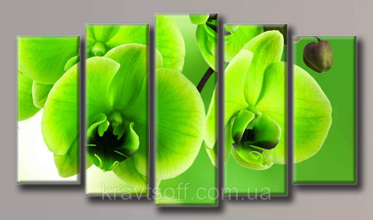 """Модульная картина на холсте из 5-ти частей """"Зелёная орхидея"""" ( 73х128 см )"""
